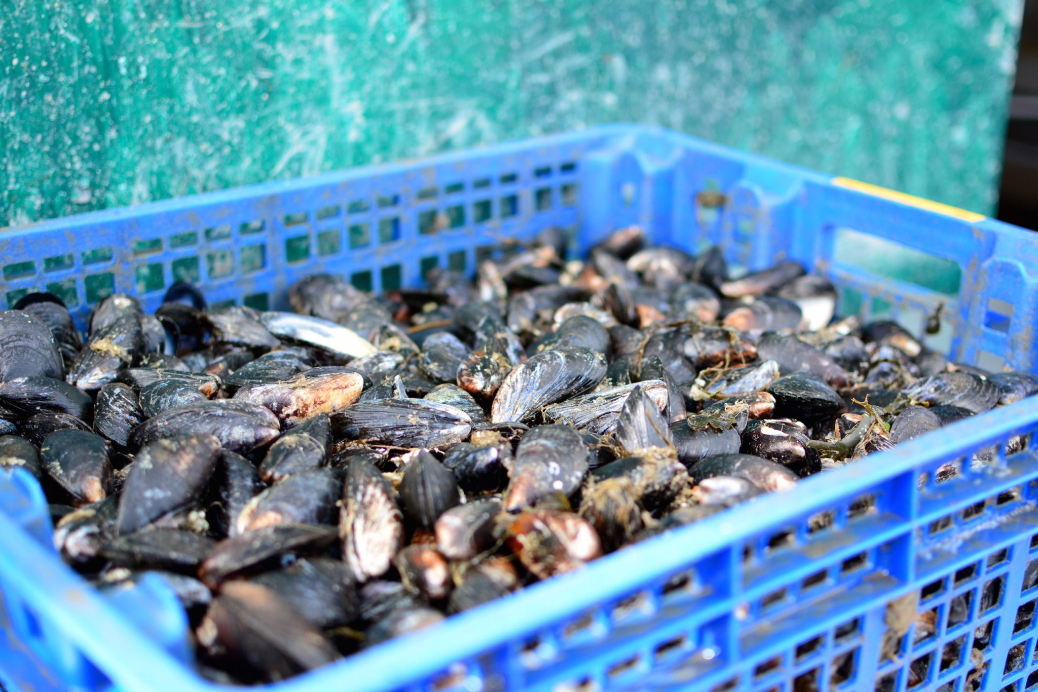 a-lovely-planet-mussels