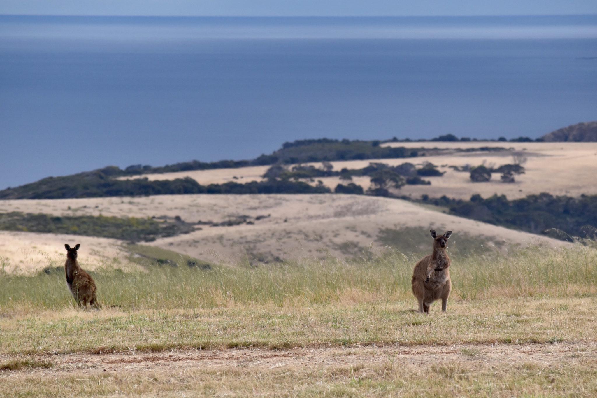A Guide To Kangaroo Island, Australia
