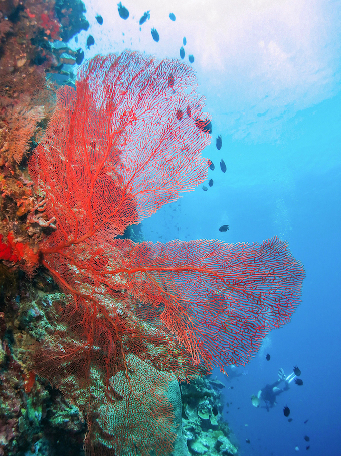 A Lovely Planet - North Sulawesi - Sarah & James - Celebes Diving